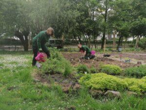 Gemüsepflanzen für die Grünschleife. Foto: Stadt Münster.